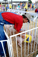 IRENE ROJAS/MissourianEthan Ott of Hedrick's Racing Pigs puts a racing silk on a piglet at the Boone County Fair on Thursday, July 23, 2009.